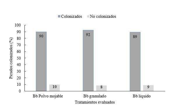 Porcentaje de colonización de picudos según formulaciones de Beauveria bassiana.