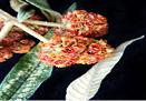 Resultado de imagen de quishuar planta